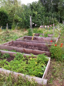 Over-grown allotment
